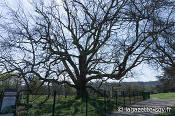 Des balades naturalistes bientôt organisées au parc de Diane - La Gazette de Saint-Quentin-en-Yvelines