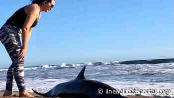 ¡Héroes sinaloenses! Familia escuinapense rescata a delfín varado en playas El Palmito - LINEA DIRECTA