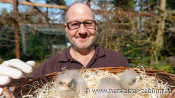 Vogelpark Walsrode: Baby-Boom bei den Riesen-Seedlern - Hersfelder Zeitung