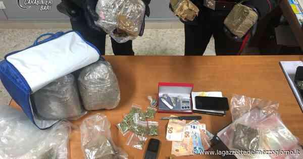 Sannicandro di Bari: in casa con 4kg e mezzo di droga, due arresti - La Gazzetta del Mezzogiorno