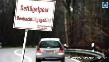 Geflügelpest Im Landkreis Cloppenburg: Einstallungen in Garrel spätestens ab 6. Mai möglich - Nordwest-Zeitung