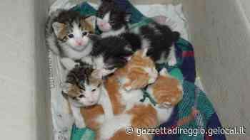 Cuccioli abbandonati in uno scatolone Monito del Comune di Viano - Gazzetta di Reggio
