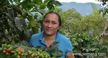 Café sostenible para reivindicar al pueblo Pijao - Semana
