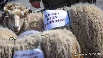 """Umweltminister regeln Abschuss: Ab wann der Wolf ein """"Problemwolf"""" ist"""