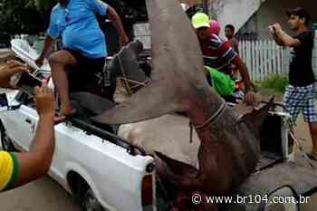 É real ou fake vídeo de captura de tubarão-martelo em Maragogi? Entenda o caso - BR 104