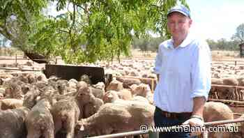 AWI is keen supporter of ewe competitions
