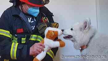 Kirn: Feuerwehr befreit Hund aus misslicher Lage - Rhein-Zeitung