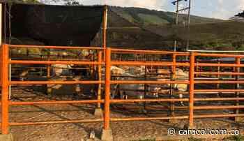 A punto de cerrarse planta de sacrificio de Oiba - Caracol Radio