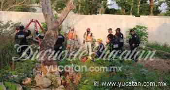 Perrito muere ahogado tras caer a un pozo, en Ticul - El Diario de Yucatán