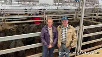 Wodonga steers to $2380, heifers to $2005