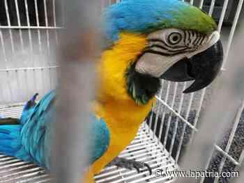Entregaron aves silvestres en Anserma - La Patria.com