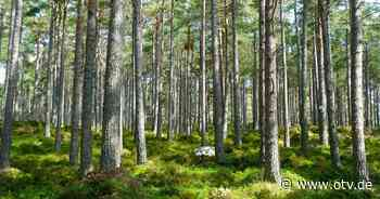 Schnaittenbach: Forstbetrieb erinnert an Brennholz für den Winter - Oberpfalz TV