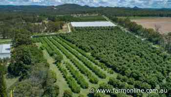 Lockyer orchard sold before auction | Video