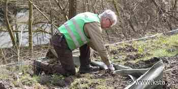 Eitorf: Schutzzäune aufgebaut – BUND bringt Kröten über die Straße - Kölner Stadt-Anzeiger