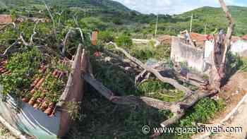 Árvore centenária desaba em três casas em Santana do Ipanema - Gazetaweb.com