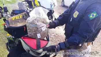 PRF apreende skunk na BR-158, em Santana do Livramento - Portal de Camaquã