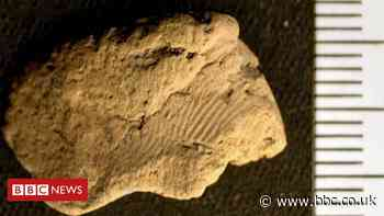 Fingerprint from 5,000 years ago found in Orkney