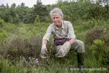 """Slangenexperte Katja Claus houdt hart vast: """"Ik vrees voor grote populatie adders"""""""