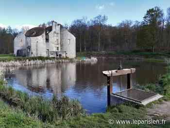 Forêt de Montmorency : des mesures pour lutter contre les inondations - Le Parisien