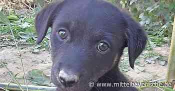 Thalmassing bekommt Hundemarken - Mittelbayerische
