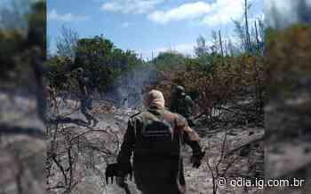 Incêndio destrói área de preservação ambiental em Arraial do Cabo - Jornal O Dia