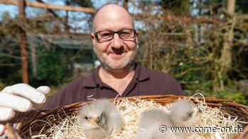Vogelpark Walsrode: Baby-Boom bei den Riesen-Seedlern - Meinerzhagener Zeitung
