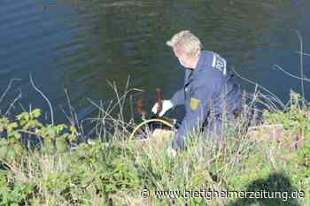Nach dem Fund getöteter Tiere in der Enz bei Besigheim: Zwei Äxte gefunden - Bietigheimer Zeitung