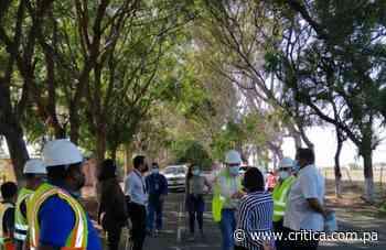 MiAmbiente no dio permiso para talar tunel verde en Guararé - Crítica