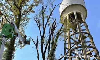 Bacino idrico di Albizzate, rimosse le piante pericolanti. Pozzi: «Sicurezza strutturale» - MALPENSA24 - malpensa24.it