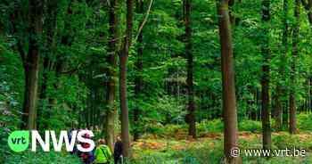 """Kravaalbos in Asse en Aalst wordt groter en toegankelijker, """"We gaan resoluut voor meer openbaar bos"""" - VRT NWS"""