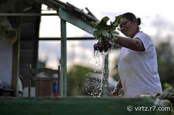 Horta comunitária é fonte de renda para famílias em Sete Lagoas (MG) - R7.COM