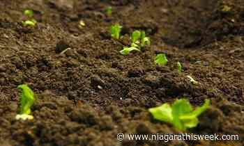 Beamsville grape grower advocates for regenerative farming practices - Niagarathisweek.com