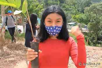 Pasco: siembran en Villa Rica 400 plantones de bambú por el Día de la Tierra - Agencia Andina
