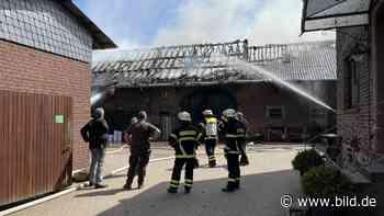Feuer in Mechernich: 30 Kühe und Kälbchen aus brennender Scheune gerettet - BILD
