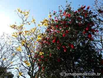 Estação das flores: Primavera inicia com tempo seco   Jornal Bom Dia - Jornal Bom Dia