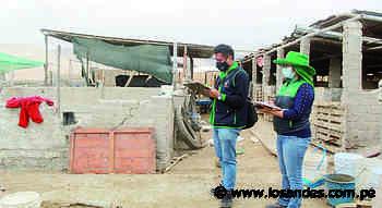 Granjas de cerdos y aves operan en zonas consideradas residenciales en Camaná - Los Andes Perú