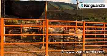 Advierten que matadero de Oiba podría ser cerrado o reclasificado - Vanguardia