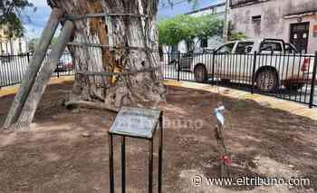 Plantaron un retoño del algarrobo que fue sombra para Belgrano - El Tribuno.com.ar