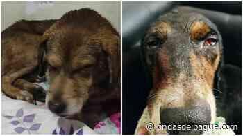 Mascotas de la comisaria de Palocabildo fueron brutalmente atacados por desconocidos - Ondas de Ibagué
