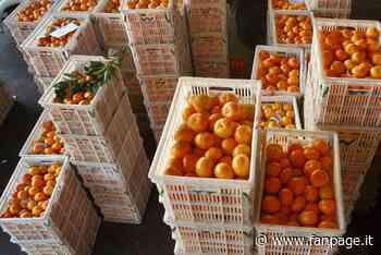 Carugate, truffa e rapina gli anziani fingendo di vendere frutta e ortaggi: arrestato - Fanpage.it