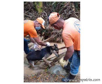 Rescatan a canino atrapado en el lodo en Anserma - La Patria.com