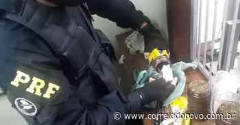 Traficantes são perseguidos e presos pela Polícia Rodoviária Federal em Charqueadas - Jornal Correio do Povo