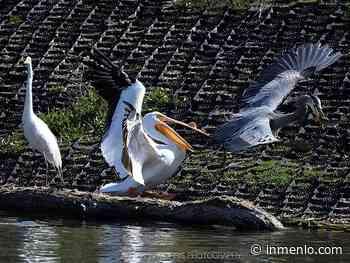 Spotted: Birds fishing at Sandy Wool Lake - InMenlo