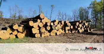 À Lissieu, abattage de chênes centenaires avec l'aval de la Métropole - Rue89Lyon