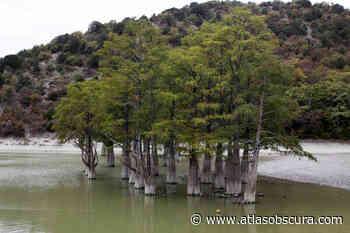 Sukko Cypress Lake – Krasnodar Krai, Russia - Atlas Obscura