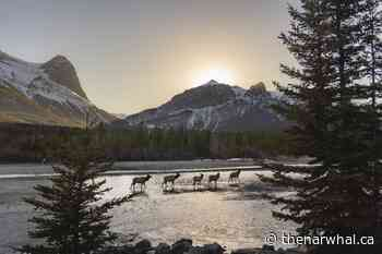 Canmore at a crossroads: proposal to double population worries residents - The Narwhal