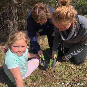 Mattawa families learn value of gardening with homegrown program - The North Bay Nugget