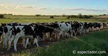 Suba de precios de los granos, ¿oportunidad o crisis para la lechería? - El Espectador Uruguay