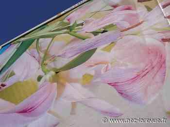 Joy de Morgan Courtois : désordre artistique et olfactif à Aubervilliers - Nez le mouvement culturel olfactif - Nez, la revue olfactive