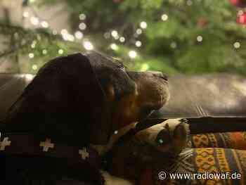 Polizei bringt Hundewelpen in Everswinkel in Sicherheit - Radio WAF